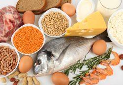 Yüksek Proteinli Diyetler ve Obezite